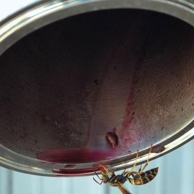 Even wasps love our wine