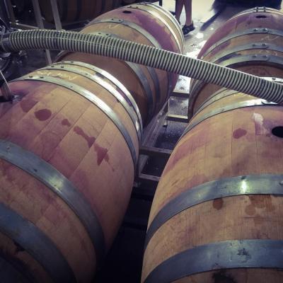 Filling barrels with Merlot